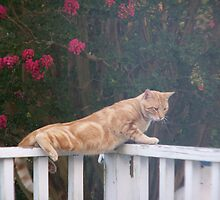 Daddy cat on watch by gheil