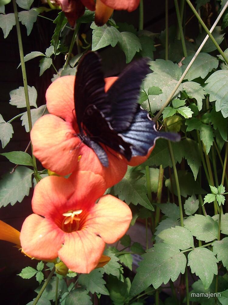 butterfly by mamajenn