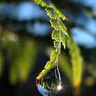 Dew Drop by Paul Fleming