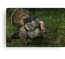 Prince of poultry Canvas Print