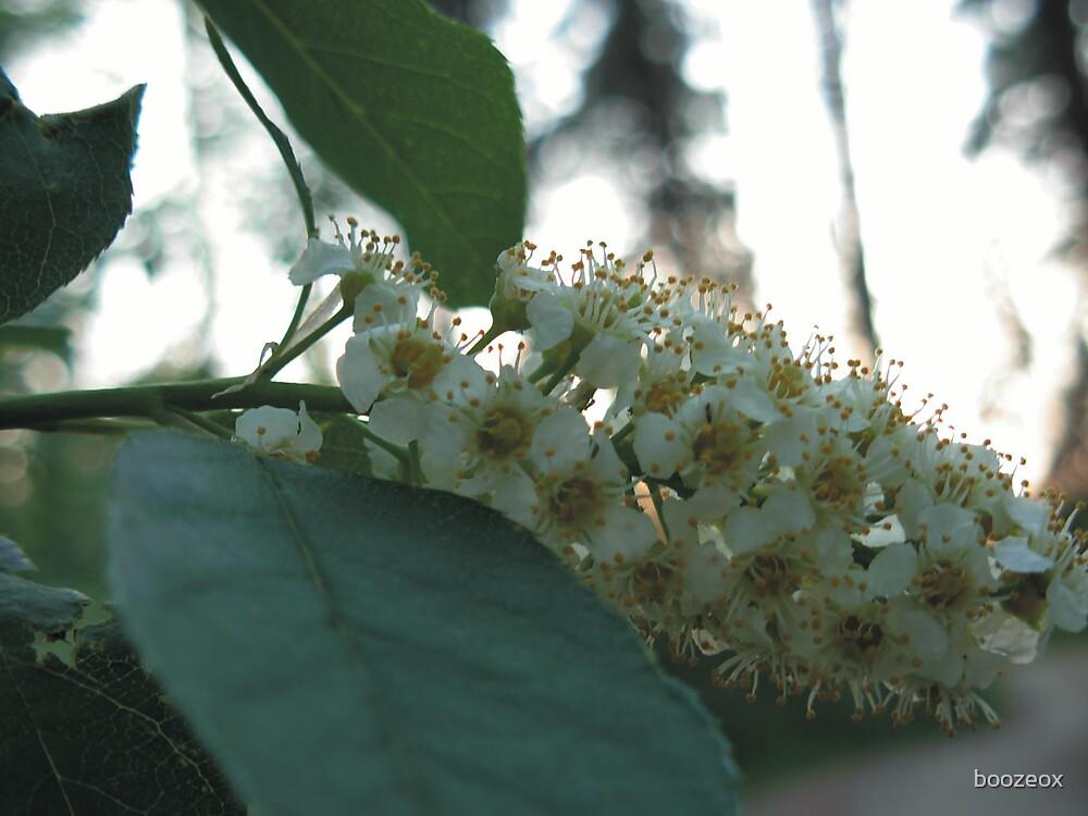 Flower by boozeox