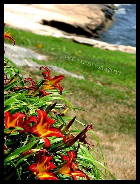 Flowers by Melissa  Carroll