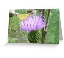 Thistle with butterfly Greeting Card