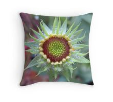 Gaillardia Throw Pillow