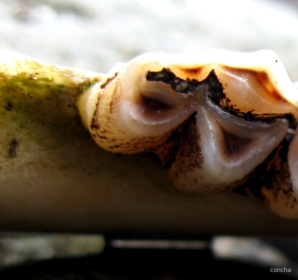 Mystery Teeth 2 by concha
