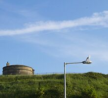 Seagull in Howt, Dublin by bejelith