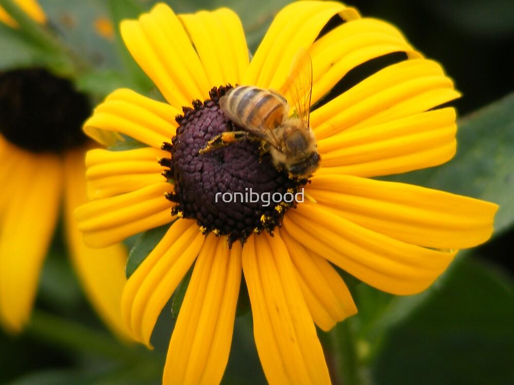 Black Eyed Honey Bee by ronibgood