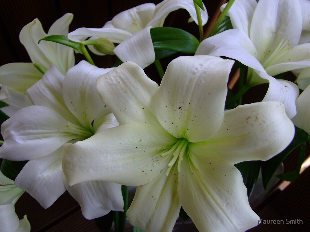 White Lily by Maureen Smith