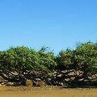 Bending Tree by Steve Burke