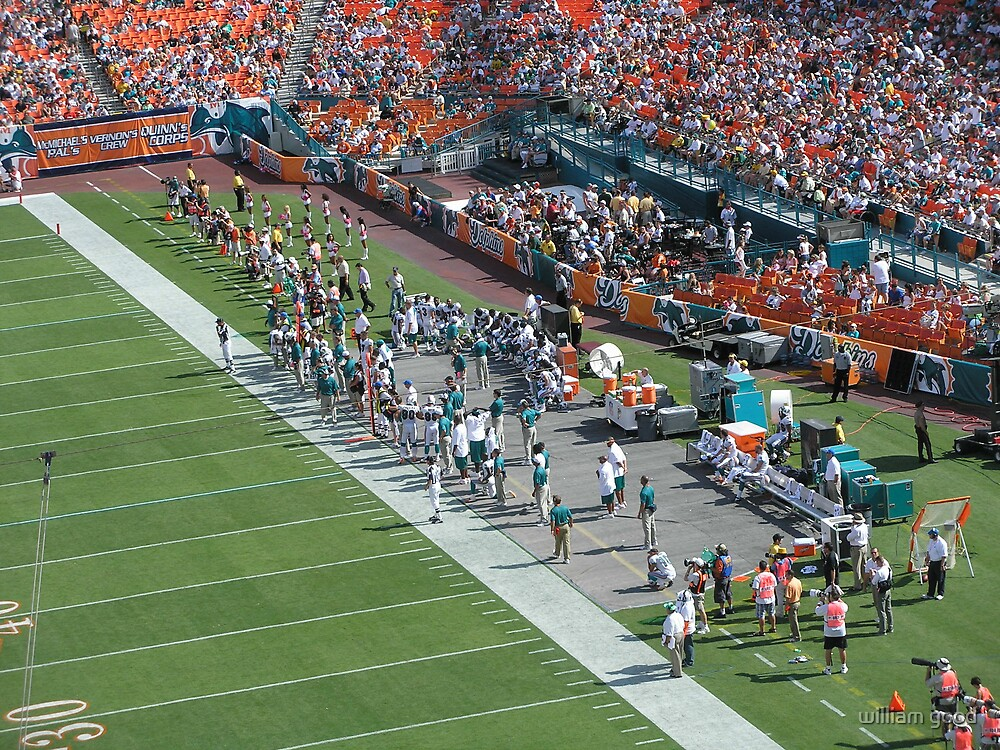 the dolphins sideline by william good
