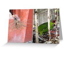 San Miguel de Allende - Postcard 19 Greeting Card