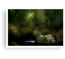 Taggerty River III Canvas Print