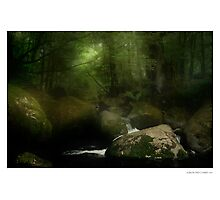 Taggerty River III Photographic Print