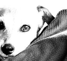 DOG'S LIFE by pintsize