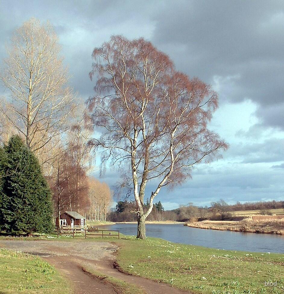 River Tweed by blod