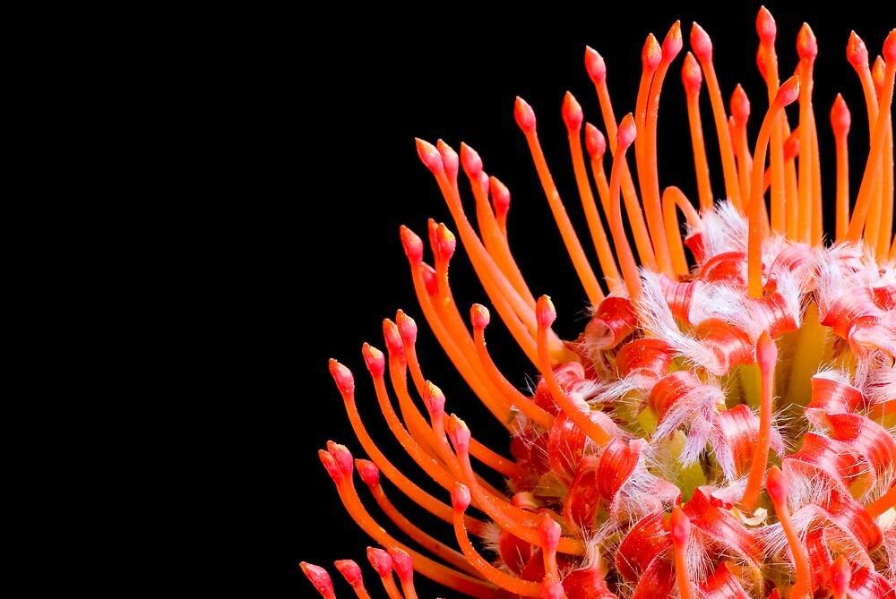 Flora Auras by nipfluff