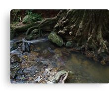 Daintree Earth Magic Canvas Print
