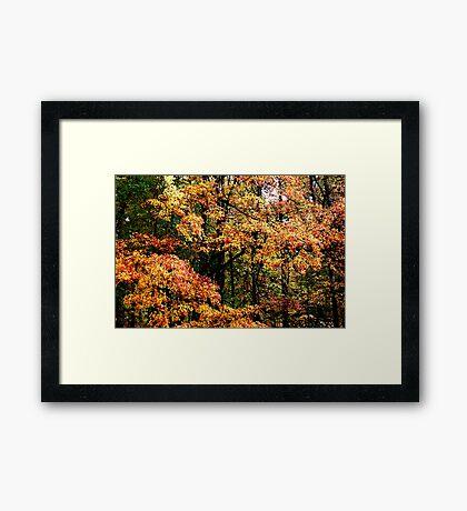 Fall Color II Framed Print