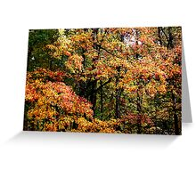 Fall Color II Greeting Card