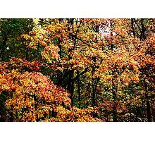 Fall Color II Photographic Print