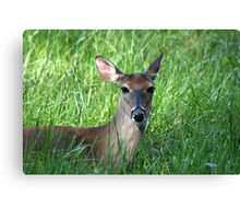 White-Tailed Doe Canvas Print