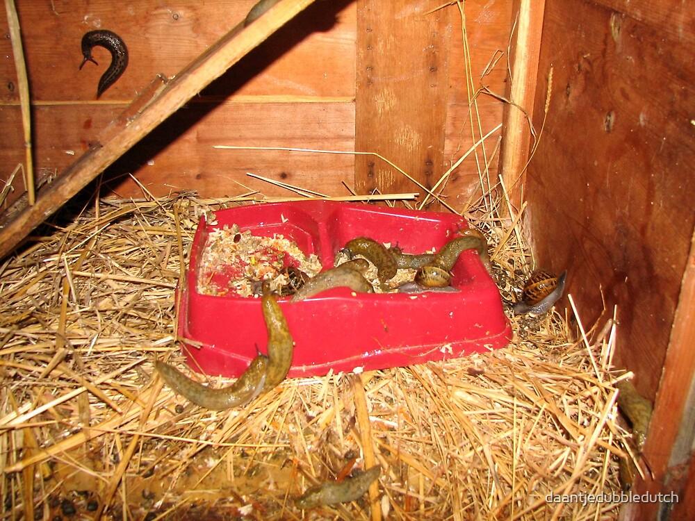 slugs for dinner.... by daantjedubbledutch