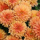 Orange Mums by Gary L   Suddath
