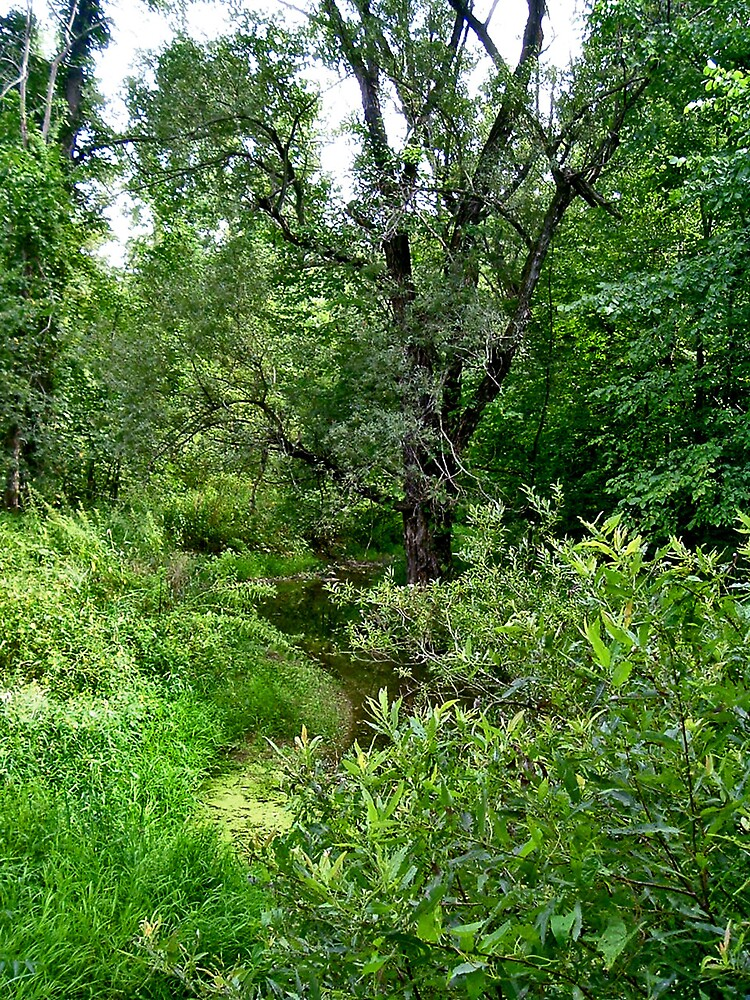 Enchanted Forest II by Erika Benoit