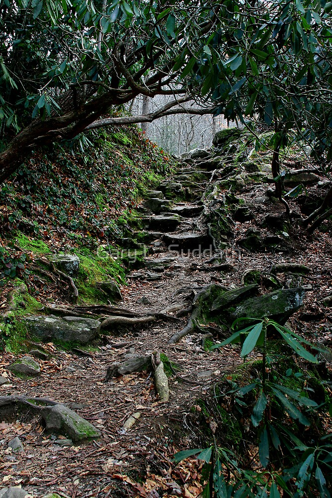 Uncertain Pathways by Gary L   Suddath