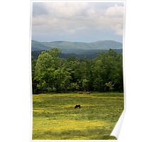 Horses In A Field Poster