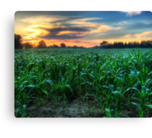 Michigan Fields of Corn Canvas Print