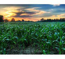 Michigan Fields of Corn Photographic Print