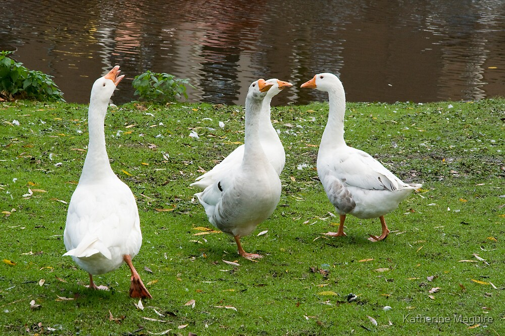 Geese meeting by Katherine Maguire