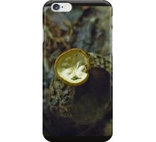Bird's Nest Mushroom On Acorn Cap iPhone Case/Skin