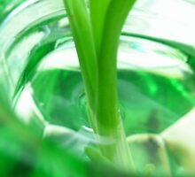 Green Leaf in Jar by boozeox