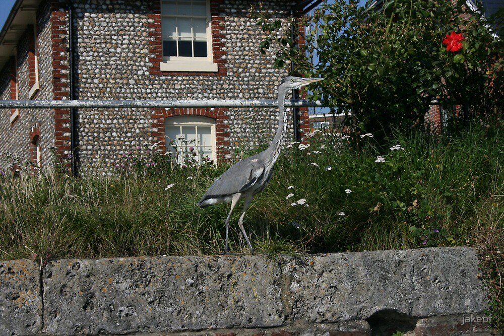 Heron In Front Of Percy's by jakeof