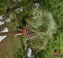 palm by dawnskaggs