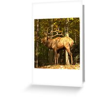 Hey check out my rack Greeting Card
