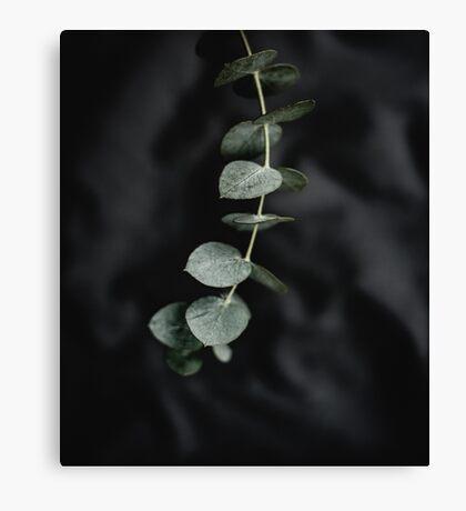 Night garden vine Canvas Print