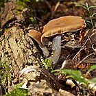 Life On The Woodland Floor by MotherNature2