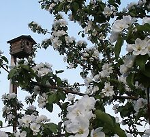Apple Blossoms With Bird House In Appleville by Sandra Foster