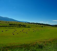 Fresh Hay in Fields of Green by Holly Werner
