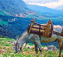 In Clover on Mt. Parnassus, Delphi, Greece by Priscilla Turner