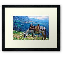 In Clover on Mt. Parnassus, Delphi, Greece Framed Print