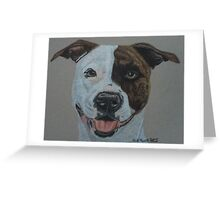 American Pit Bull Terrier II Greeting Card