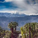 Palm Desert by Imagery