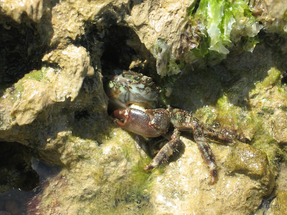 the crab by francy