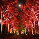 Kings Park by slj1122