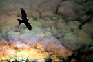 Black Kite and Iridescent Cloud by Ern Mainka