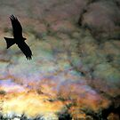 Black Kite and Iridescent Cloud by Ern Mainka